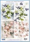 Карта серии Цветы