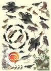 Декупажная карта А4 Дикие птицы