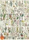 Декупажная рисовая карта ProArt, 13,5х19см, Маки