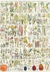 Декупажная рисовая карта А5, Ботанический атлас. Том 5