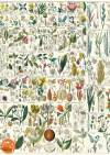 Декупажная рисовая карта ProArt, 13,5х19см, серия Собаки, В кресле