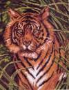 Рисунок на канве 28х34см Тигр