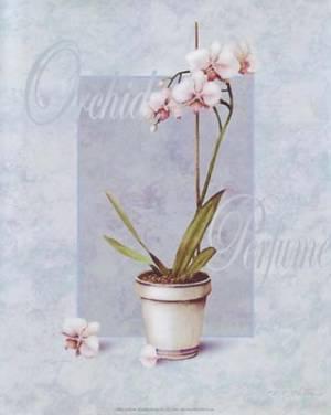 Набор Орхидея в горшке